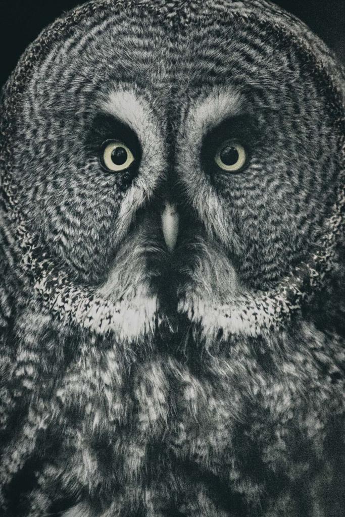 Puszczyk mszarny - niezwykły portret zwierząt ZOO. Magda Głogowska Portrecistka Zwierząt fotograf. Projekt Bilet roczny