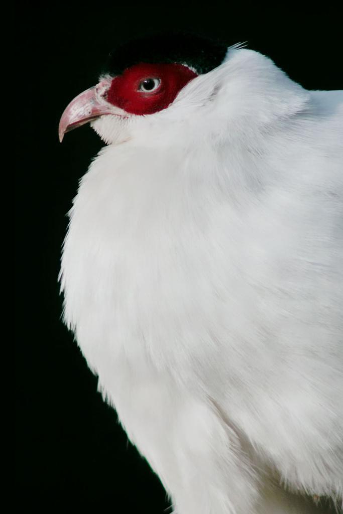 Uszak biały - niezwykły portret zwierząt ZOO. Magda Głogowska Portrecistka Zwierząt fotograf. Projekt Bilet roczny.