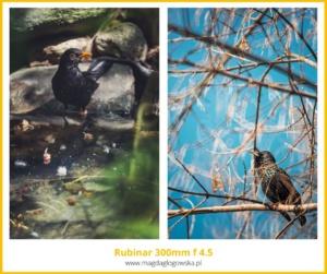 Niezwykły obiektyw doportretu oładnym bokeh - Rubinar 300 mm f 4.5