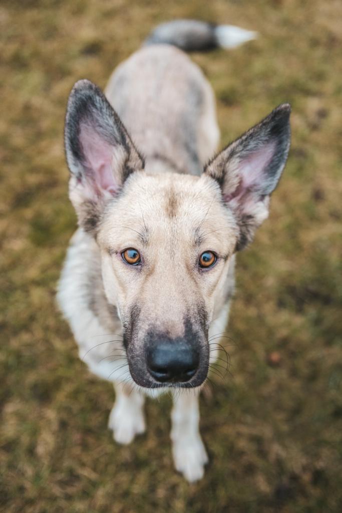 Fotografia psów Warszawa, czyli sesja zdjęciowa dla psa i jego właściciela. Magda Głogowska Portrecistka Zwierząt - psi fotograf